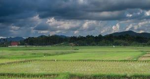 Chmury niebo i ryż pola Fotografia Stock