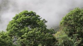 Chmury Poruszająca Up góra Za drzewami Peru zbiory