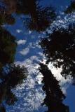 Chmury przez drzew Fotografia Royalty Free