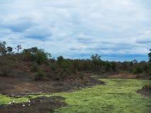 Chmury, staw i światło słoneczne przed burzą, afrykańska sawanna, Kruger, Południowa Afryka Zdjęcia Royalty Free