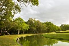 Chmury w nieba chodzeniu i wietrzny przez kiwania drzewo i trawę Fotografia Royalty Free