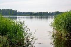 chmurzący dzień jeziorem z wodną trawą Obrazy Stock