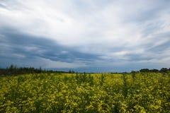 Chmurzący nieba pole dziki Dramatyczny natury tło ręki barwiona ilustracja zrobił natury lato kolorowa krajobrazowa wiosna Niebo  obraz royalty free