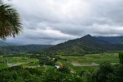 Chmurzący Hanalei taro Dolinni pola w Kauai Hawaje Zdjęcie Stock