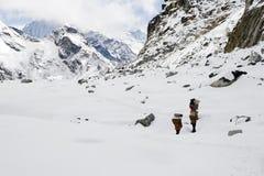 cho la Nepalu pass Obraz Stock