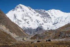 Cho Oyu halny szczyt, 6th wysoki halny szczyt w świacie, E Zdjęcia Royalty Free
