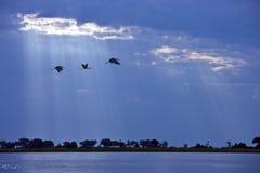 Chobe flod i Botswana Royaltyfria Bilder