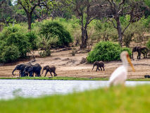 Chobe landscape Stock Photo