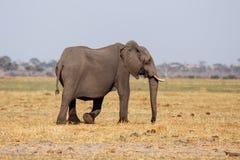 Chobe N.P. Botswana, Africa Stock Images