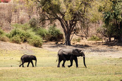 Chobe N.P. Botswana, Africa Royalty Free Stock Photos