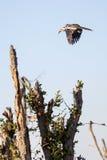 Chobe N P Botswana, Afryka Obrazy Stock