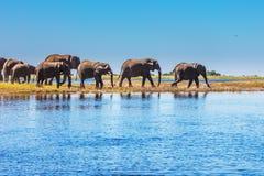 The Chobe National Park Stock Photos