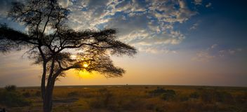 Chobe park narodowy między Botswana i Namibia przy zmierzchem w Afryka Zdjęcie Stock