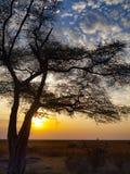 Chobe park narodowy między Botswana i Namibia przy zmierzchem w Afryka Obraz Stock