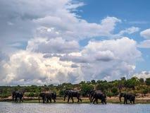 Chobe river Stock Photo