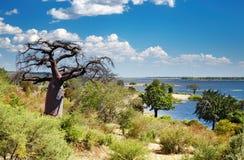 Chobe river in Botswana. African landscape, Chobe river, Botswana royalty free stock images