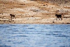 Chobe River, Botswana, Africa Royalty Free Stock Images