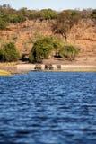 Chobe River, Botswana, Africa Royalty Free Stock Photos