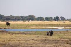 Chobe River, Botswana, Africa Stock Image