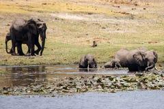Chobe River, Botswana, Africa Royalty Free Stock Image