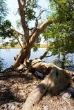 Chobe river Botswana Stock Image