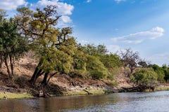 Chobe river Botswana Royalty Free Stock Photo
