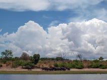 Chobe river landscape Stock Photography