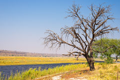 Chobe River landscape, view from Caprivi Strip on Namibia Botswana border, Africa. Chobe National Park, famous wildlilfe reserve a Stock Image