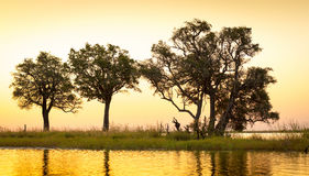 Chobe River Sunset Royalty Free Stock Photography