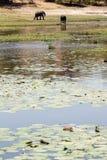 Chobe rzeka, Botswana, Afryka Zdjęcia Stock