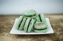 Choc mint macarons. Choc mint macrons on a square plate stock photos