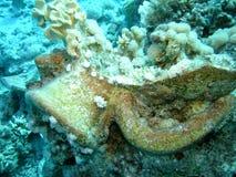 Choc romain encroûté par corail photographie stock libre de droits