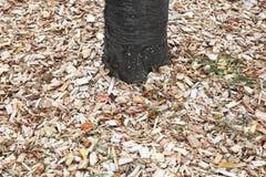 Chochoł wokoło drzewa obrazy stock