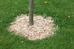 Chochoł wokoło drzewa zdjęcia royalty free