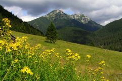Chocholowska Valley in Tatra Mountains. Beautiful Mountains in the middle of Europe Royalty Free Stock Image