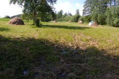 Chock av sugrör på grönt gräs arkivfoto