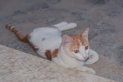 Chockad katt Arkivfoton