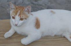 Chockad katt Royaltyfria Foton