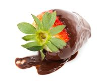 Choclate Coated Strawberry Stock Image