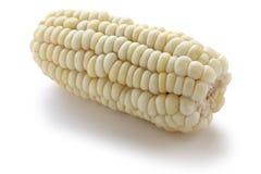 Choclo, giant white corn Royalty Free Stock Photo