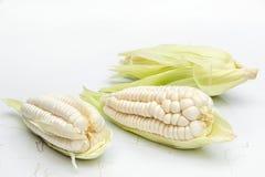 Choclo, reuze wit graan Op een witte achtergrond stock fotografie