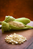 Choclo, White Peruvian or Cuzco Corn Royalty Free Stock Photography
