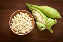 Choclo, White Peruvian or Cuzco Corn Royalty Free Stock Photos