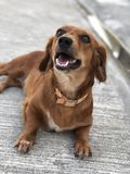 Chocodog fotografia stock