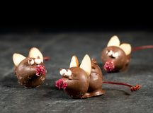 Chocolade behandelde muis bovenop leilijst Royalty-vrije Stock Fotografie
