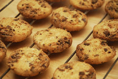 Chocolade Chips Cookies Royalty-vrije Stock Foto's