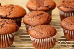 Chocolade cupcakes bij het koelen van rek Stock Foto's