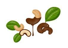 Chocolade omvatte cashewnoten Stock Foto