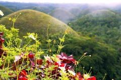 Chocoladeheuvels Bohol islend filippijnen Stock Foto