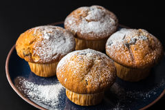 Chocolademuffins met gepoederde suiker op donkerblauwe plaat royalty-vrije stock foto's